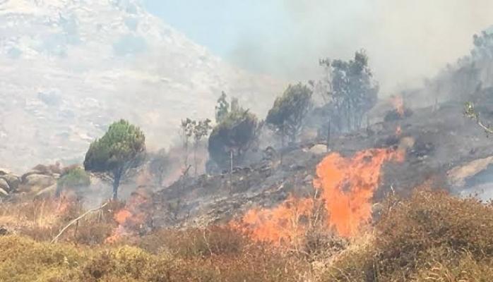 Marmara Adası'nda Yangın!