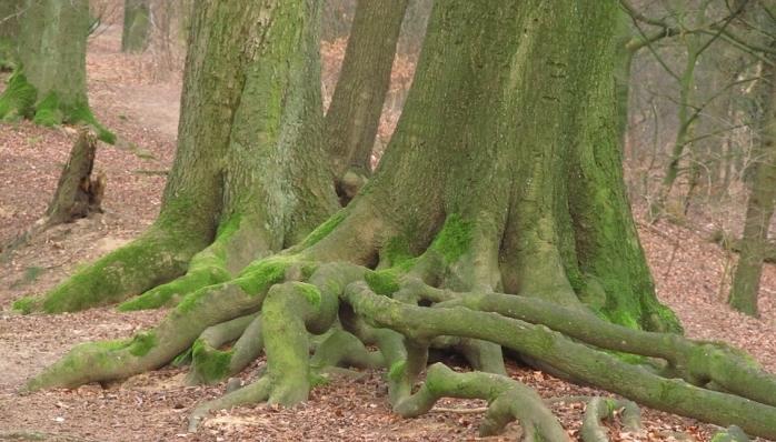 Ağaçların 'sosyal ağlarının' haritası çıkartıldı