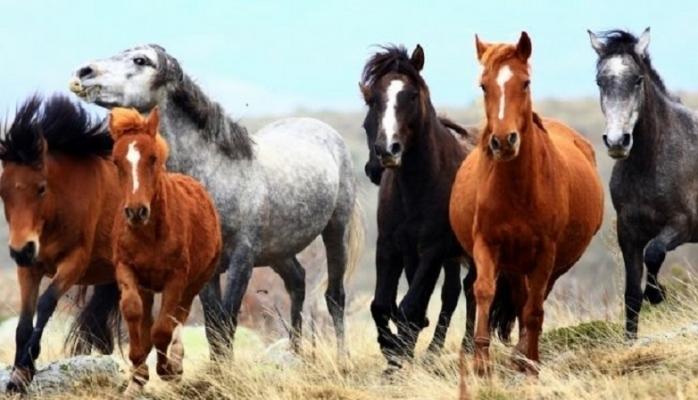 Sırra kadem basan atlarla ilgili şok gelişme