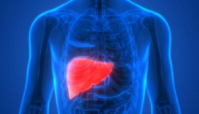 Karaciğerdeki yağlanmayı durduran kür!